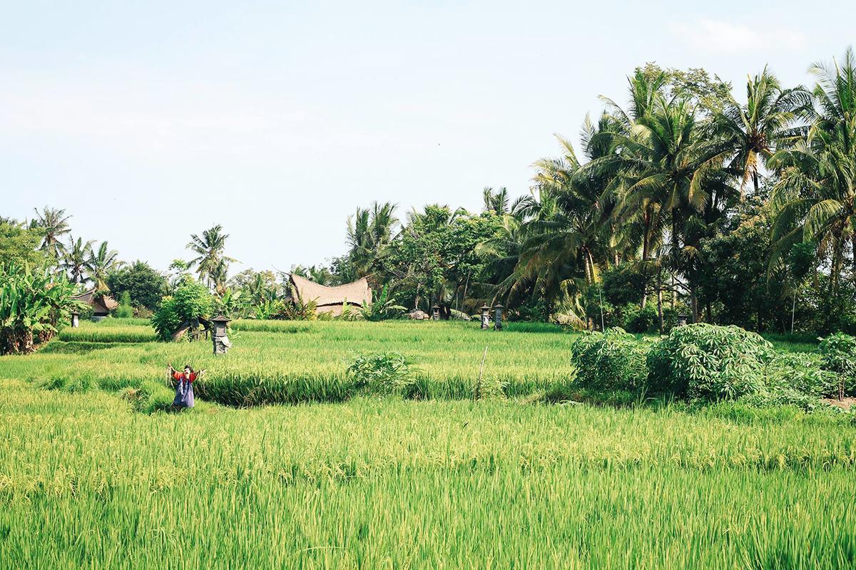 Ubud Tipps: Traumhafte Unterkünfte in den Reisfeldern