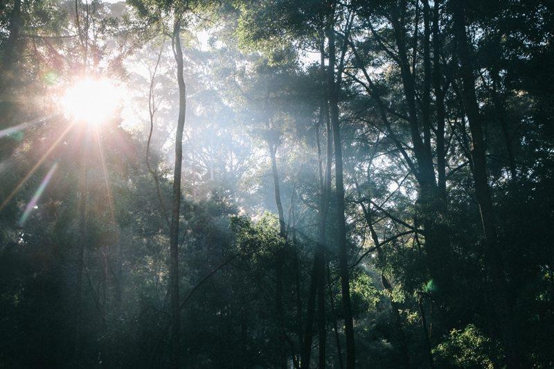 Westaustralien Roadtrip - Emotionen zulassen draußen im Wald